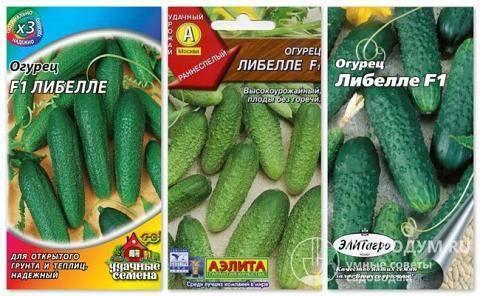 Огурец либелле f1: описание и отзывы о сорте, урожайность, фото