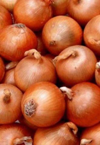 Лук роми: описание сорта, характеристика и другие особенности красного овоща, а также способы устранения болезней и вредителей, поражающих севок