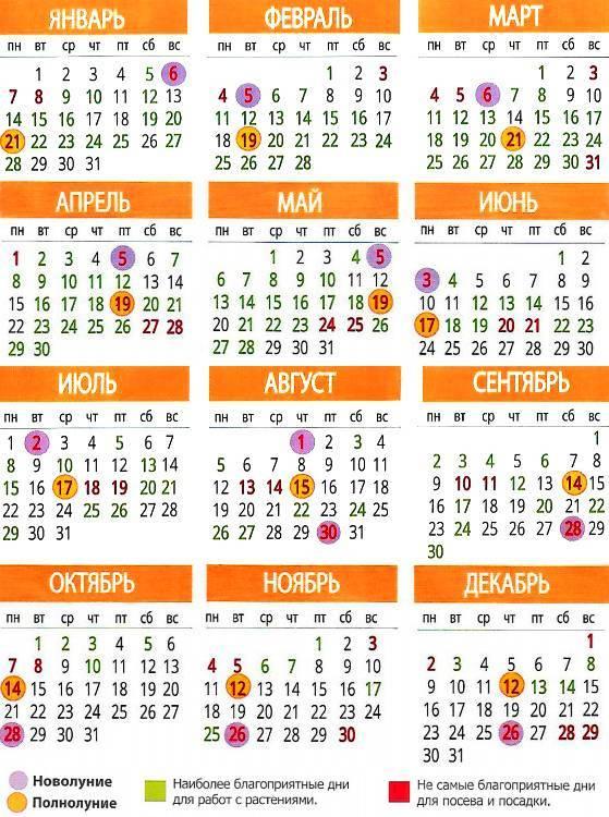 Когда сажать кабачки на рассаду в 2021 году по лунному календарю и по региону: в подмосковье, на урале, в сибири, в средней полосе