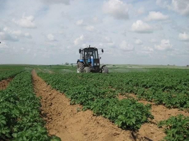 Выращивание картофеля: способы и технология