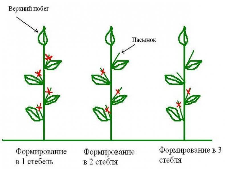 Формирование перца в теплице: как правильно формировать, схемы, фото