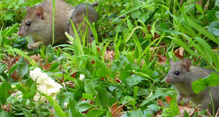 Как избавиться от мышей на даче и в частном доме: народные средства, отпугиватели и отрава