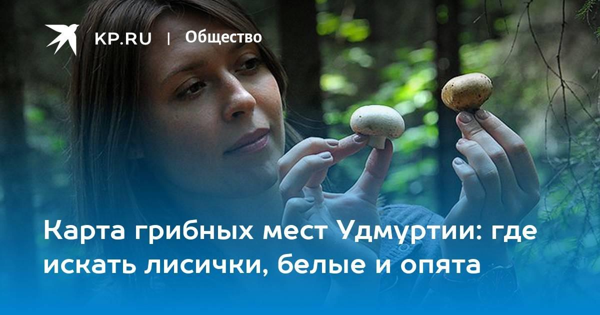 Грибы костромской области 2021: когда и где собирать, сезоны и грибные места