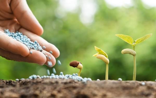 Один из наиболее эффективных, действенных фосфорных удобрений — аммофоска: когда и где применять
