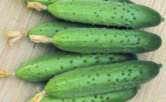 Огурец зена f1: описание и характеристика сорта, отзывы о выращивании, фото семян, посадка и уход