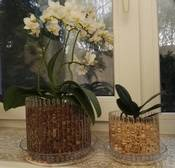 Какой лучше выбрать горшок для орхидеи