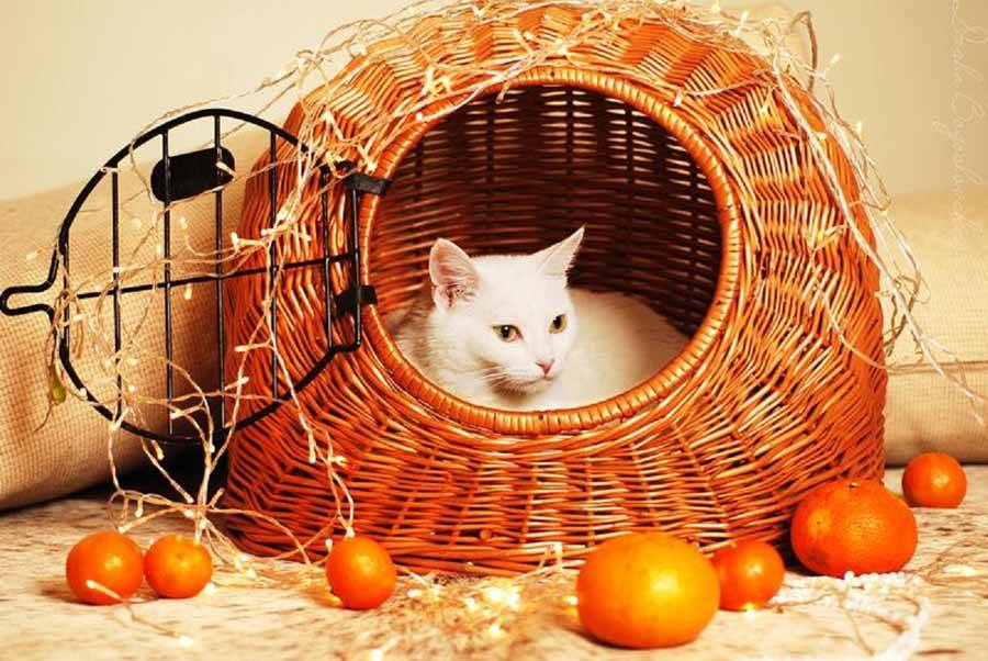 Запахи, которые не переносят большинство кошек
