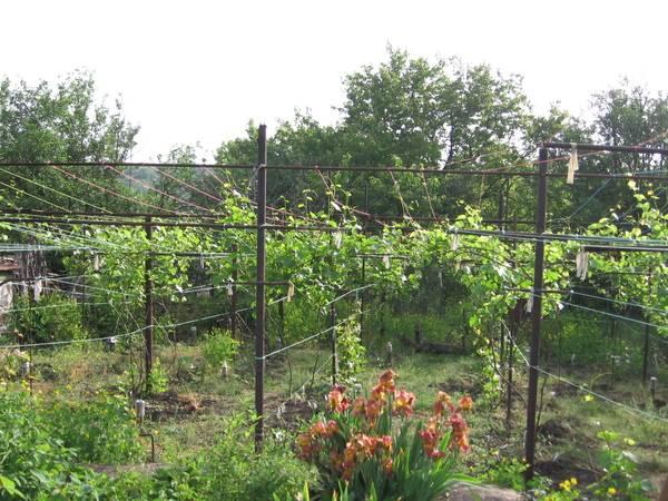 Как сделать шпалеру для винограда своими руками на даче: виды и инструкция по установке