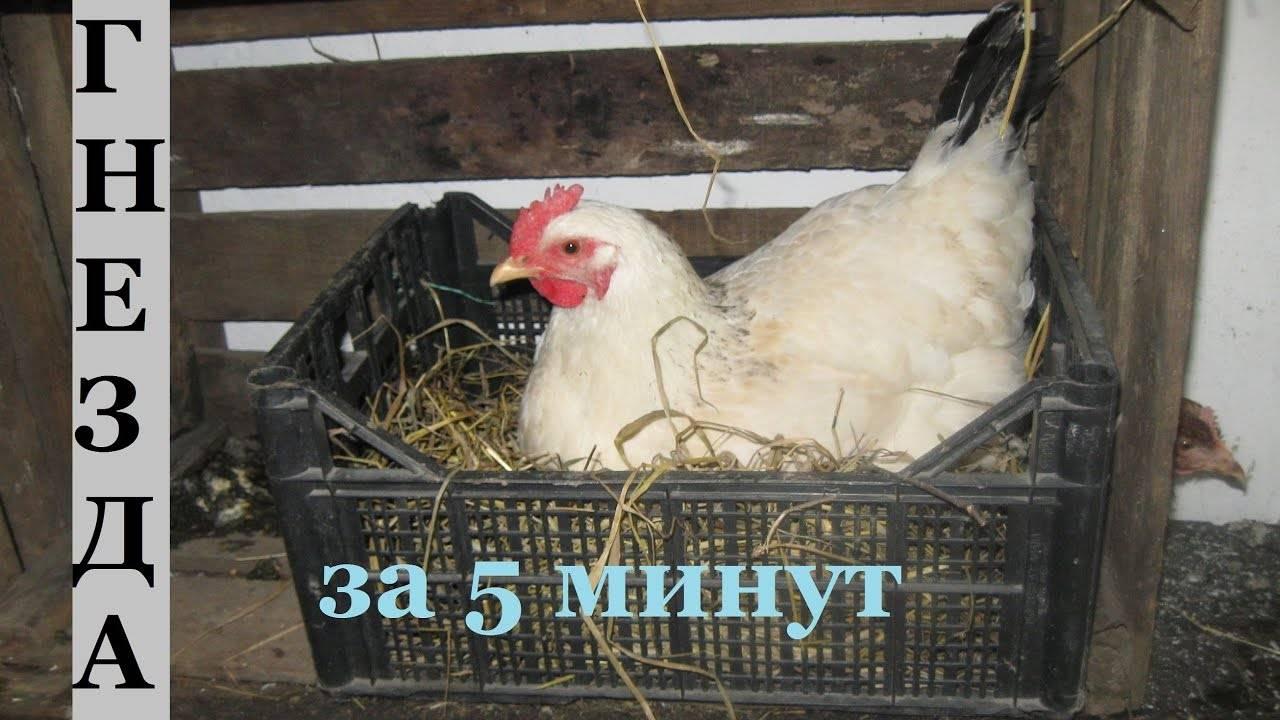 Какой необходим размер гнезда для курицы несушки?