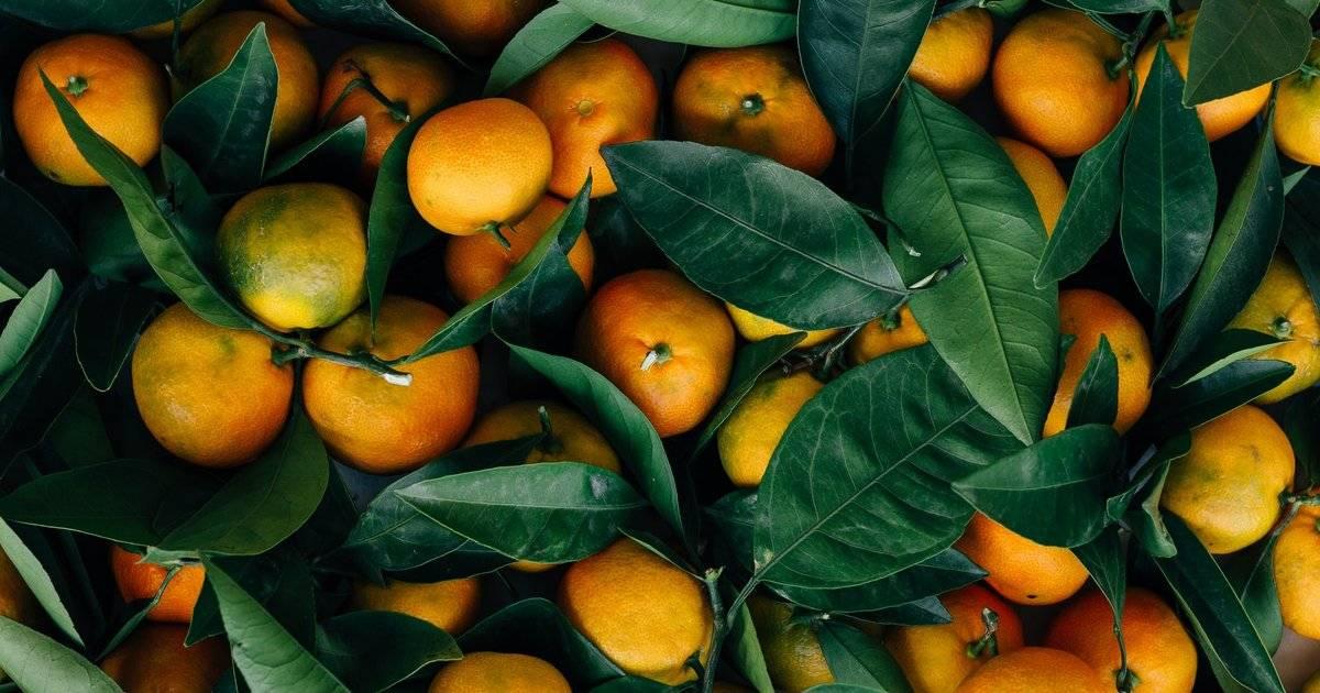 Мандарины – калорийность, польза и вред для здоровья