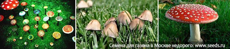 Поганки на газоне: как убрать назойливые и ядовитые грибы в 2 шага