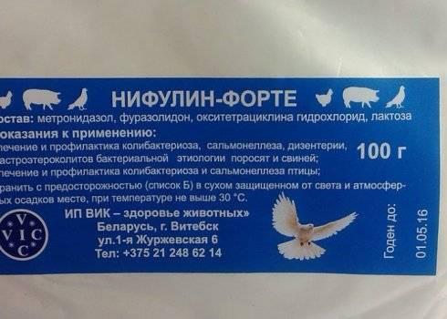 Как поймать голубя на улице: способы ловли