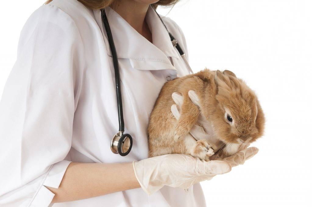 Воспаление влагалища: симптомы причины и лечение