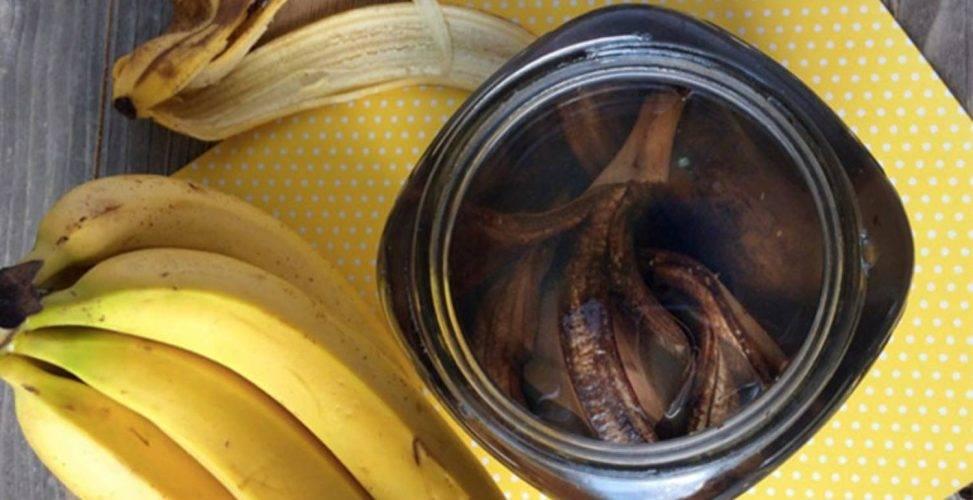 Удобрения из банановой кожуры для комнатных растений: различные подкормки для цветов из банановых шкурок