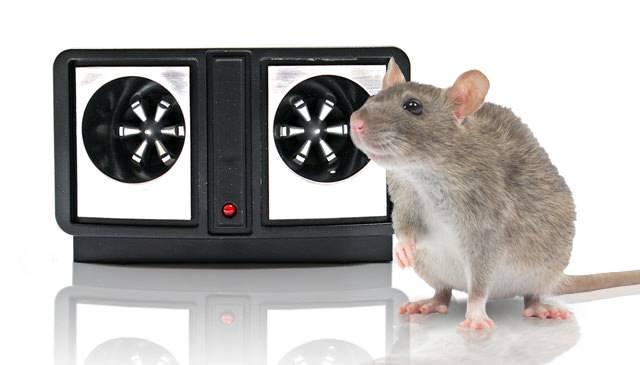 10 эффективных способов как избавиться от мышей в частном доме и квартире