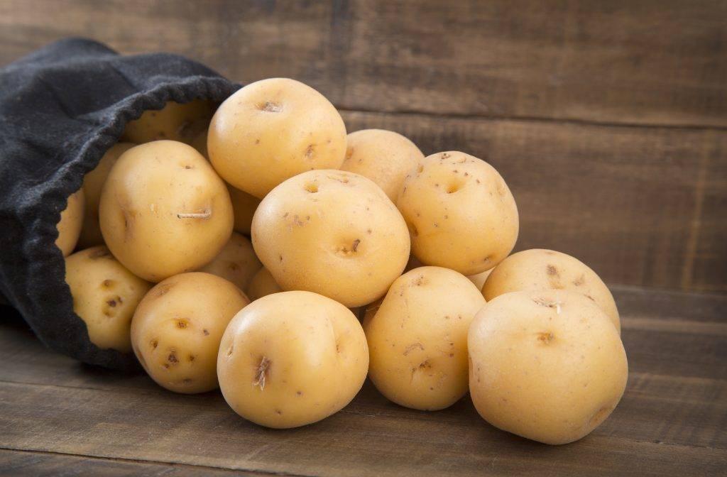 Картофель колетте: описание сорта, фото, характеристика, отзывы