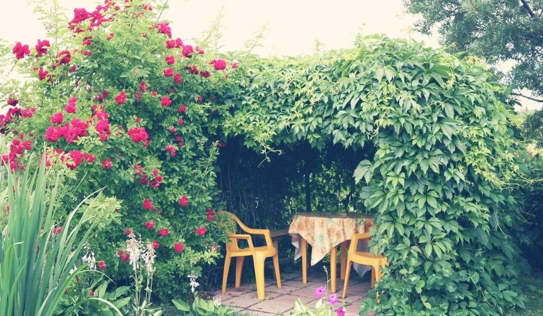 Девичий виноград: посадка  уход в саду, виды и сорта