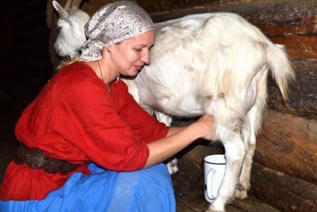 Особенности технологии доения коз