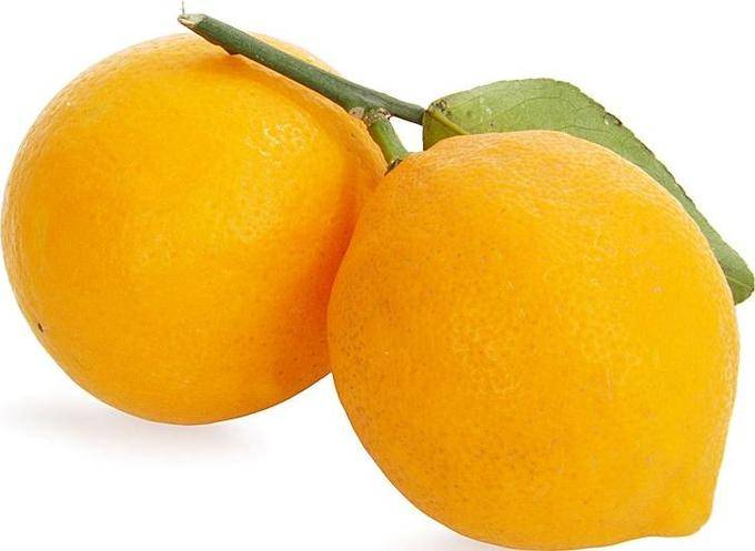 Лимон: описание, уход, выращивание, размножение и рецепты