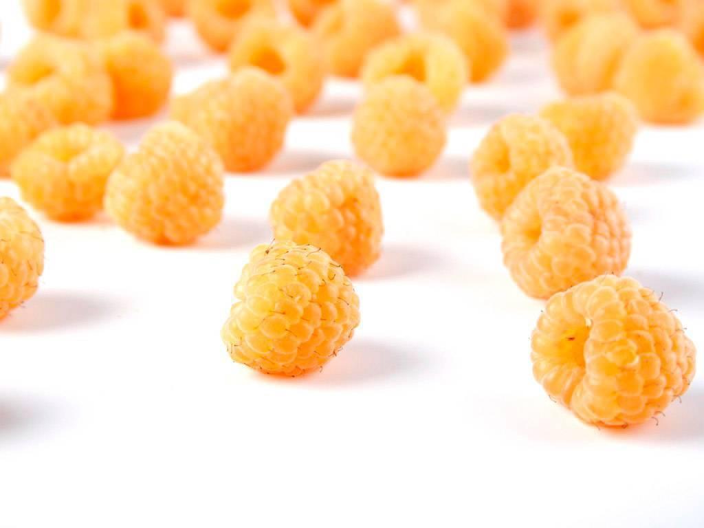 Особенности выращивания сорта малины «Желтый гигант»