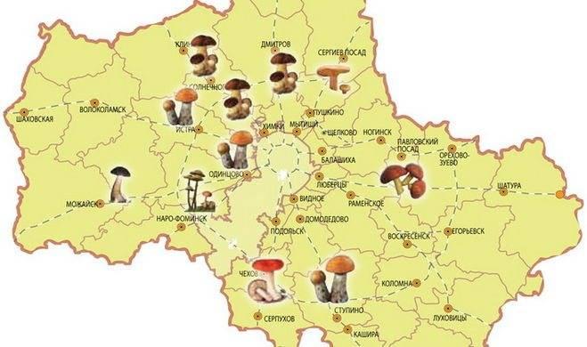 Грибные места владимирской области 2020