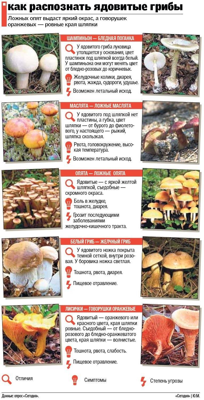 Названия съедобных и несъедобных грибов с картинками