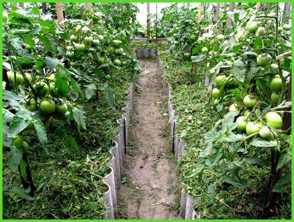 Формирование куста тепличных томатов в 1-3 стебля