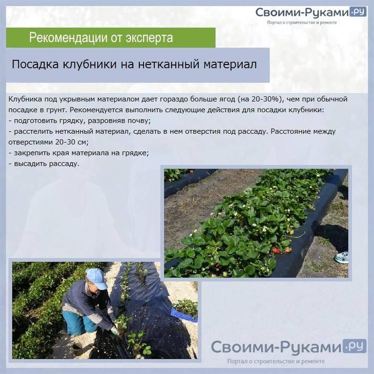 Как вырастить клубнику - садовую землянику из семян