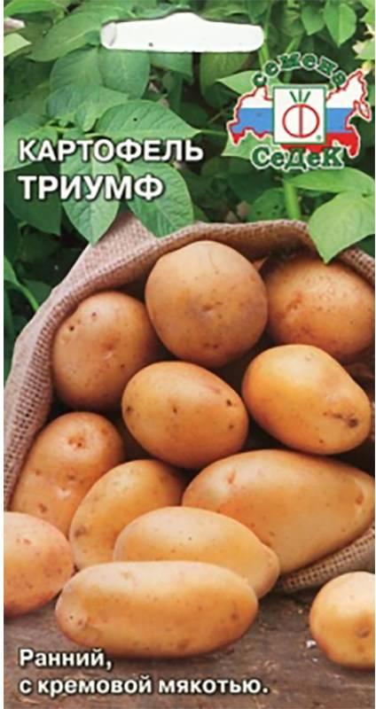 Сорт картофеля триумф характеристика описание урожайность отзывы и фото