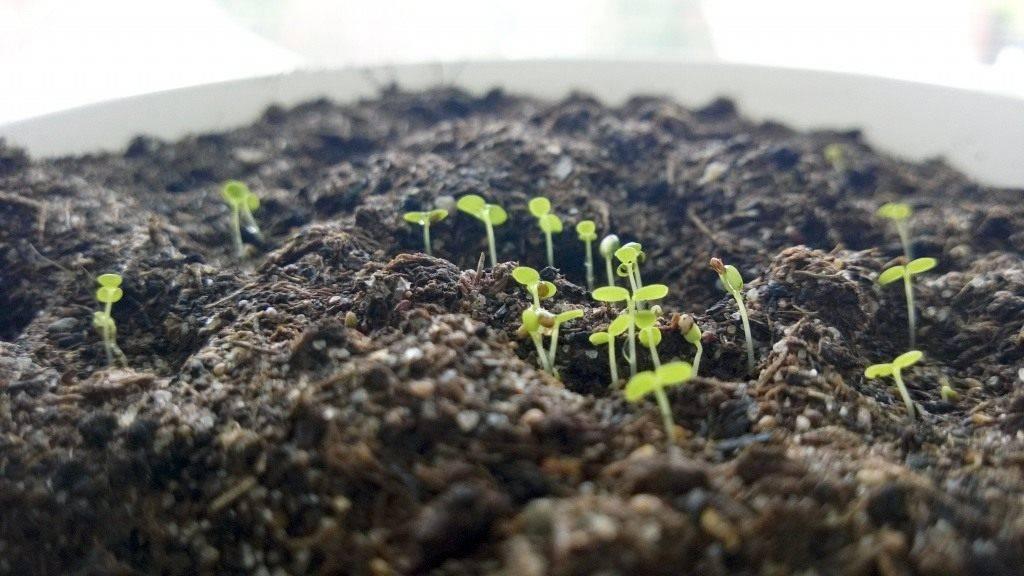 Когда в 2021 сеять семенами клубнику на рассаду, как вырастить садовую землянику: инструкция с видео