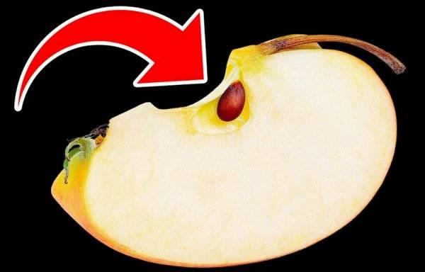 Полезны ли семечки от яблок