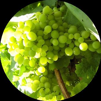 Фунгицид и акарицид тиовит джет: инструкция по применению на огороде и в саду