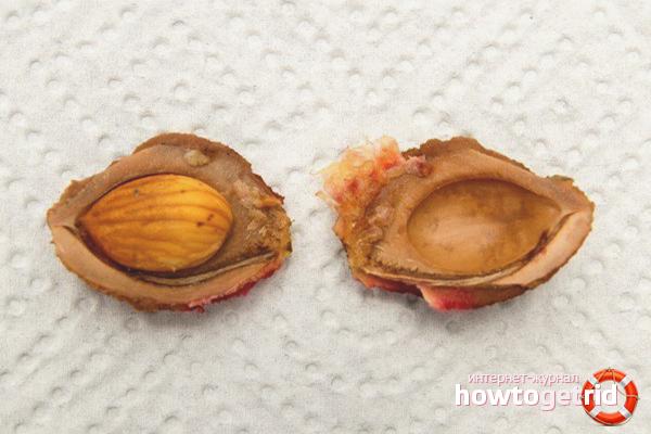 Как выращивать персик из косточки в домашних условиях - огород, сад, балкон - медиаплатформа миртесен