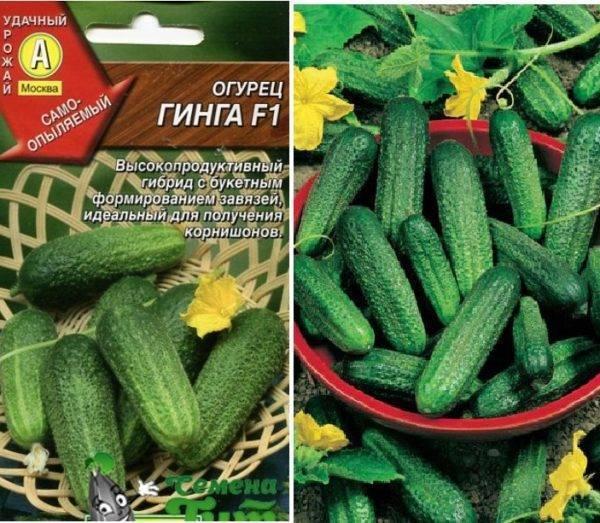 """Огурец """"гинга f1"""" описание гибридного сорта, особенности ухода и выращивания, характеристика урожая"""