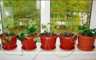Зелень на подоконнике: выращивание на подоконнике