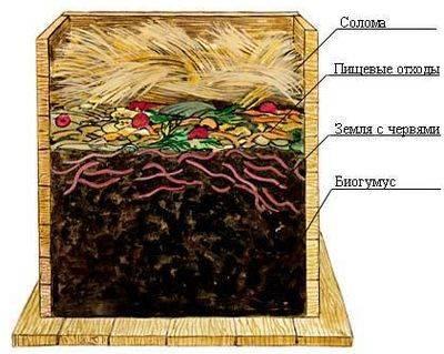 Калифорнийский червь - разведение в домашних условиях в компостере