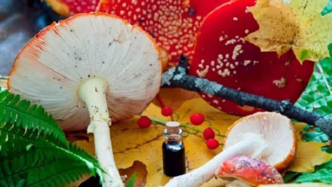 Настойка мухоморов: свойства, применение, противопоказания. как приготовить настойку из мухоморов на водке и спирту: 4 рецепта - lechilka.com