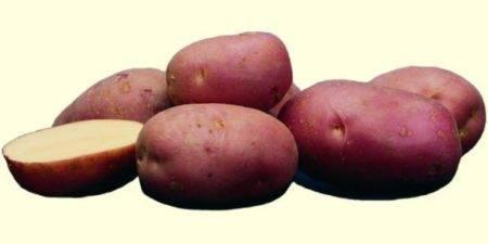 Описание и характеристики сорта картофеля агата