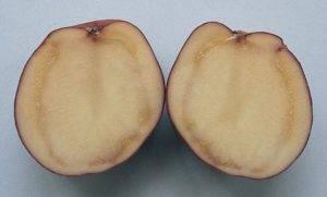 Картофель при хранении зеленеет и чернеет — почему это происходит? разбираемся в причинах болезней