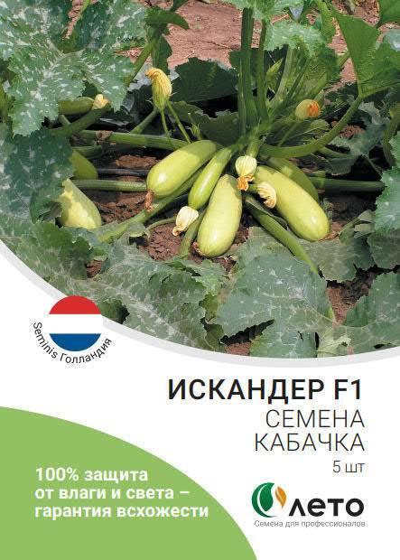 Кабачок искандер f1: описание сорта, особенности выращивания, отзывы
