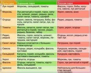 Кто с кем дружит на грядке: таблица совместимости растений