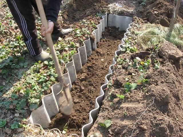 Как правильно посадить малину весной саженцами
