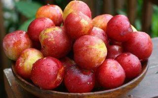 Слива «красный шар» — высокоурожайный сорт с выносливым характером - дом и участок