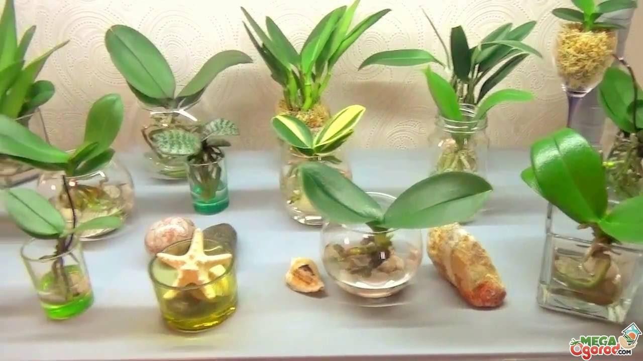 Как выбрать грунт для орхидеи фаленопсис?  покупаем в магазине или готовим своими руками