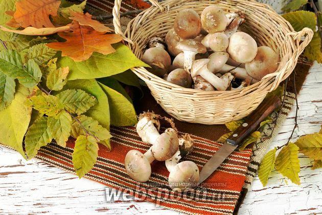 Чистка грибов вешенок - огород и сбор