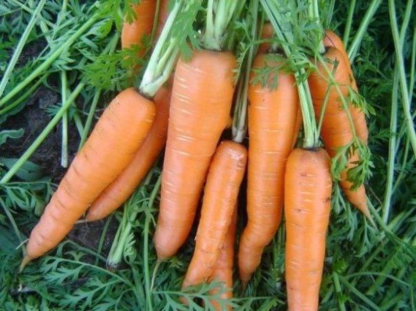 Чем подкормить морковь и свеклу после всходов, в июне, июле, августе? чем подкормить свеклу и морковь народными средствами для роста корнеплодов и сладости?