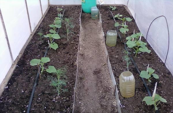 Полив помидор в теплице из поликарбоната: как часто и когда