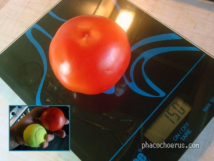 Сколько ккал в помидоре свежем 1 штука