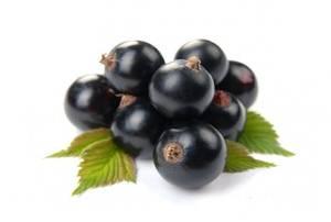 Сорт смородины черный жемчуг: описание, отзывы