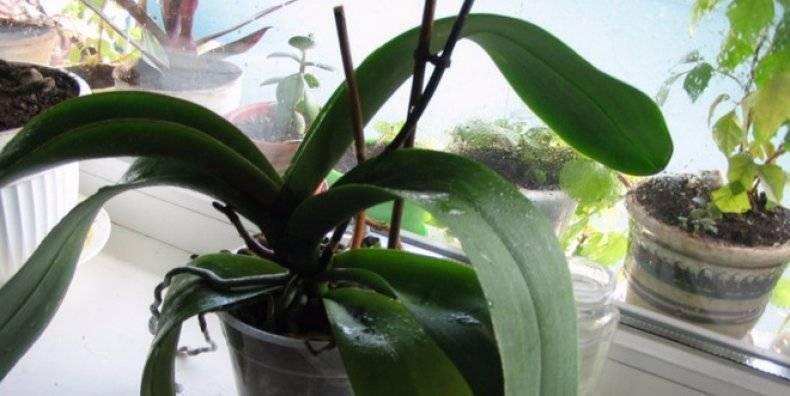 Если орхидея «ленится» — как заставить её цвести? 9 важных правил